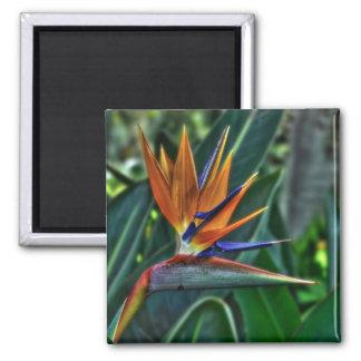 Strelitzia - Tenerife Flower Magnet