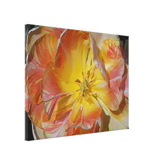 Stretched Canvas Print with Tulip Blossoming