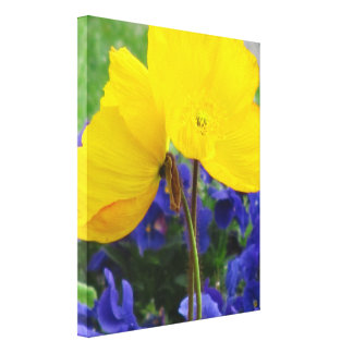 Stretched Canvas Print - Yellow Corn Poppies