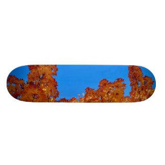 Stretched Limits Skateboard Deck