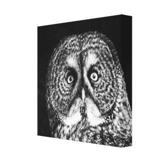 Striking night Owl black and white canvas print