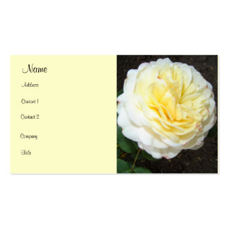 Striking Yellow Rose Pack Of Standard Business Cards