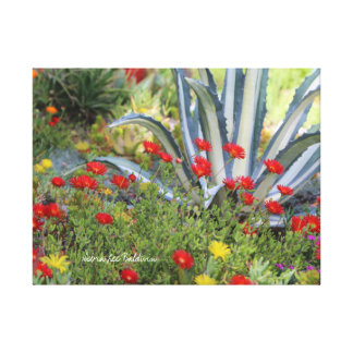 Striped Agave and Ice Plant Canvas Print