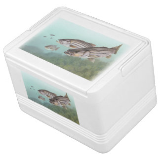 Striped Bass Cooler