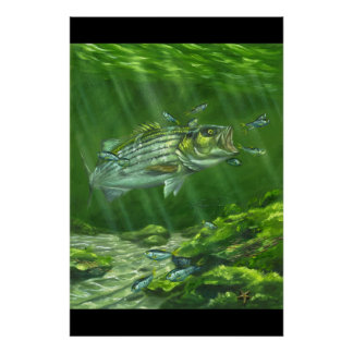 """Striped Bass on the Rocks"" Poster"