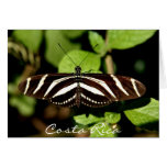 Striped Butterfly - Costa Rica Greeting Cards