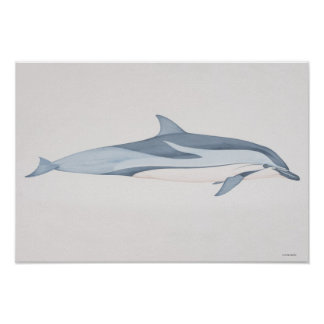 Striped Dolphin Posters