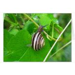 Striped Land Snail on a Green Leaf Blank Card Card