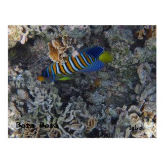 Striped mullet striped mullet island postcard