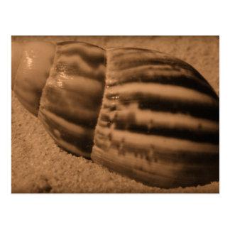 Striped Shell Postcard