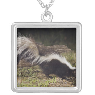 Striped Skunk, Mephitis mephitis, adult at 2 Square Pendant Necklace