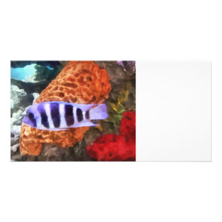 Striped Tropical Fish Frontosa Personalized Photo Card