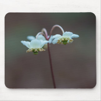 Striped Wintergreen Pipsissewa Wildflower Mousepad