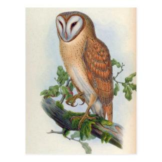 Strix Indica (Indian Screech Owl) Postcard