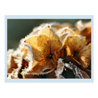 Stronghold they blooms with hoar frost postcard