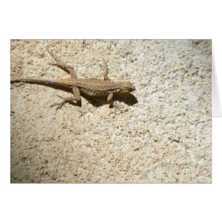 Stucco lizard card
