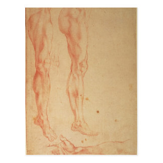 Studies of Legs and Arms Postcard
