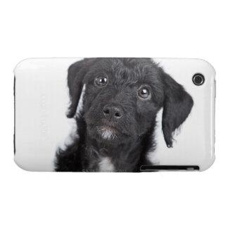 Studio portrait of black jack-a-doodle iPhone 3 case