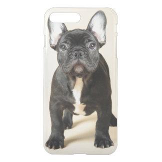 Studio portrait of French bulldog puppy standing iPhone 8 Plus/7 Plus Case