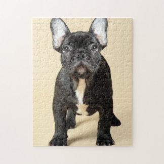 Studio portrait of French bulldog puppy standing Jigsaw Puzzle