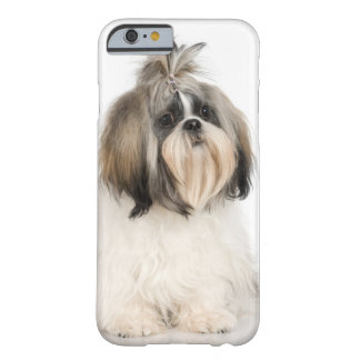 Studio portrait of Shih Tzu Barely There iPhone 6 Case