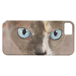 Studio portrait of Sphynx cat iPhone 5 Case