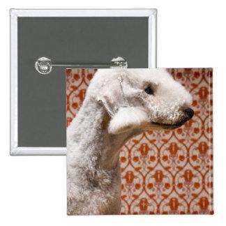 Studio shot of Bedlington Terrier 15 Cm Square Badge