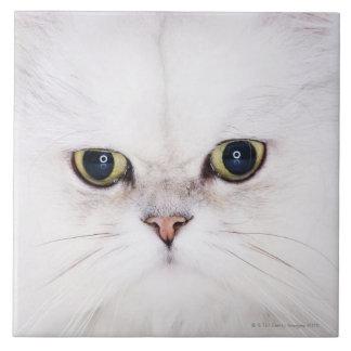 Studio shot of white Persian cat Tile