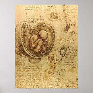 Study of baby fetus by Leonardo da Vinci Poster