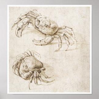 Study of Crab, Leonardo da Vinci Poster
