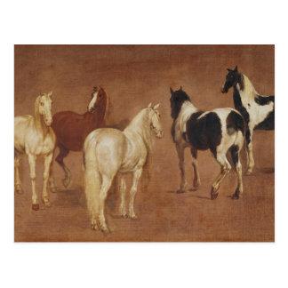 Study of Five Horses Postcard