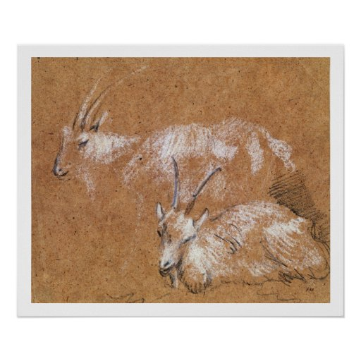 Study of Goats (drawing) Poster