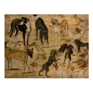 Study of Hounds, 1616 Postcard
