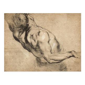 Study of man's torso by Paul Rubens Postcard