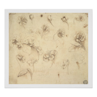 Study of the Flowers of Grass-like Plants (Briza M Poster