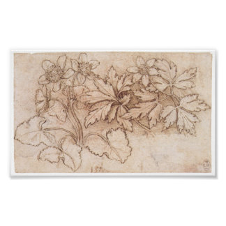 Study of Two Plants, Leonardo Da Vinci Poster