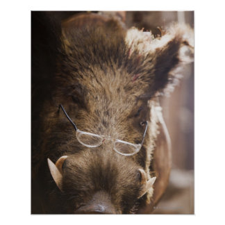 Stuffed Wild Boar Wearing Glasses Outside Poster