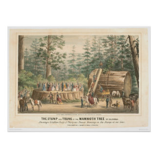 Stump of the Mammoth Tree of Calaveras (0977A) Poster