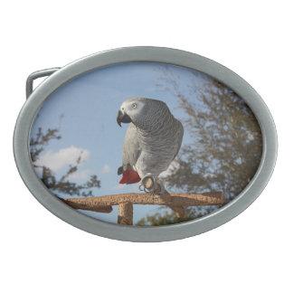 Stunning African Grey Parrot Belt Buckle