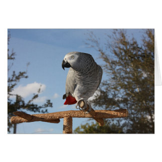 Stunning African Grey Parrot Note Card