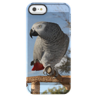 Stunning African Grey Parrot Clear iPhone SE/5/5s Case