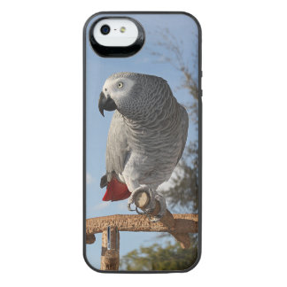Stunning African Grey Parrot iPhone SE/5/5s Battery Case