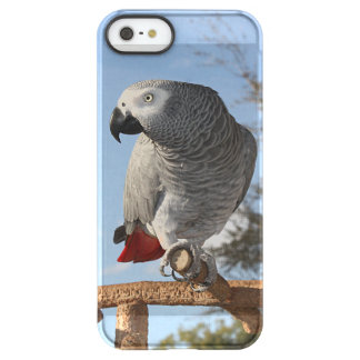 Stunning African Grey Parrot Permafrost® iPhone SE/5/5s Case