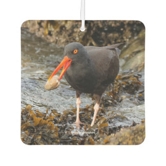 Stunning Black Oystercatcher with Clam Car Air Freshener