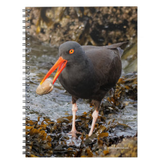 Stunning Black Oystercatcher with Clam Notebook