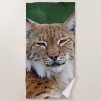 Stunning bobcat portrait beach towel