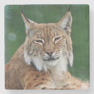 Stunning bobcat portrait stone coaster