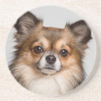 Stunning chihuahua portrait coaster