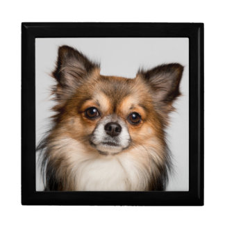 Stunning chihuahua portrait gift box
