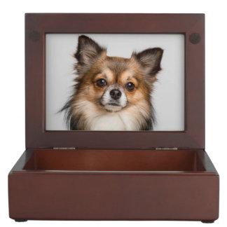 Stunning chihuahua portrait keepsake box